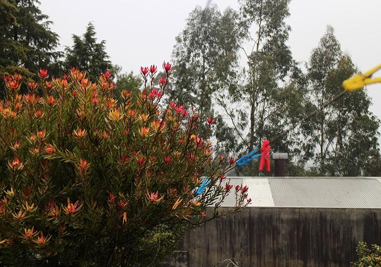 Molas da roupa à chuva