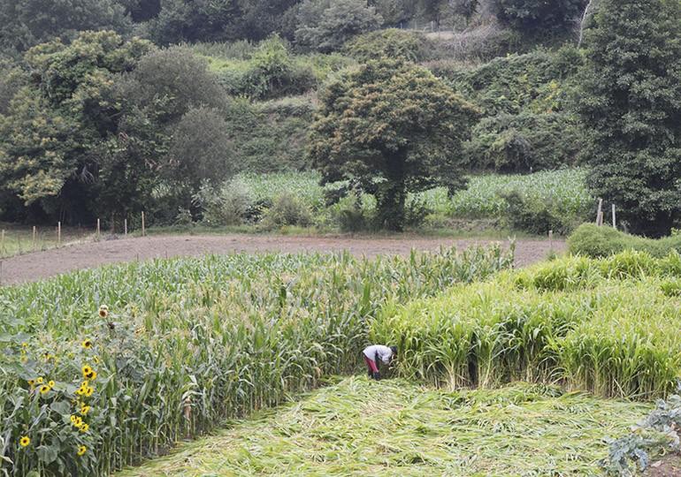 Campos agrícolas em Ribeira de Fráguas