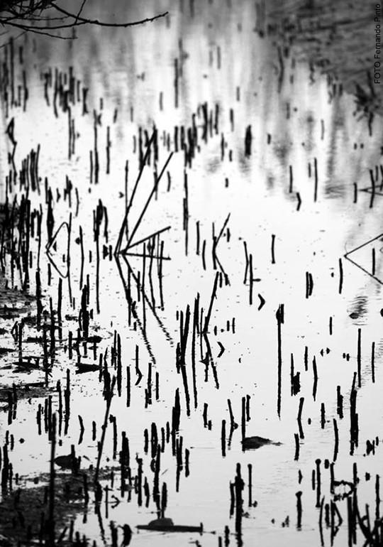 Composição | Ria de Aveiro