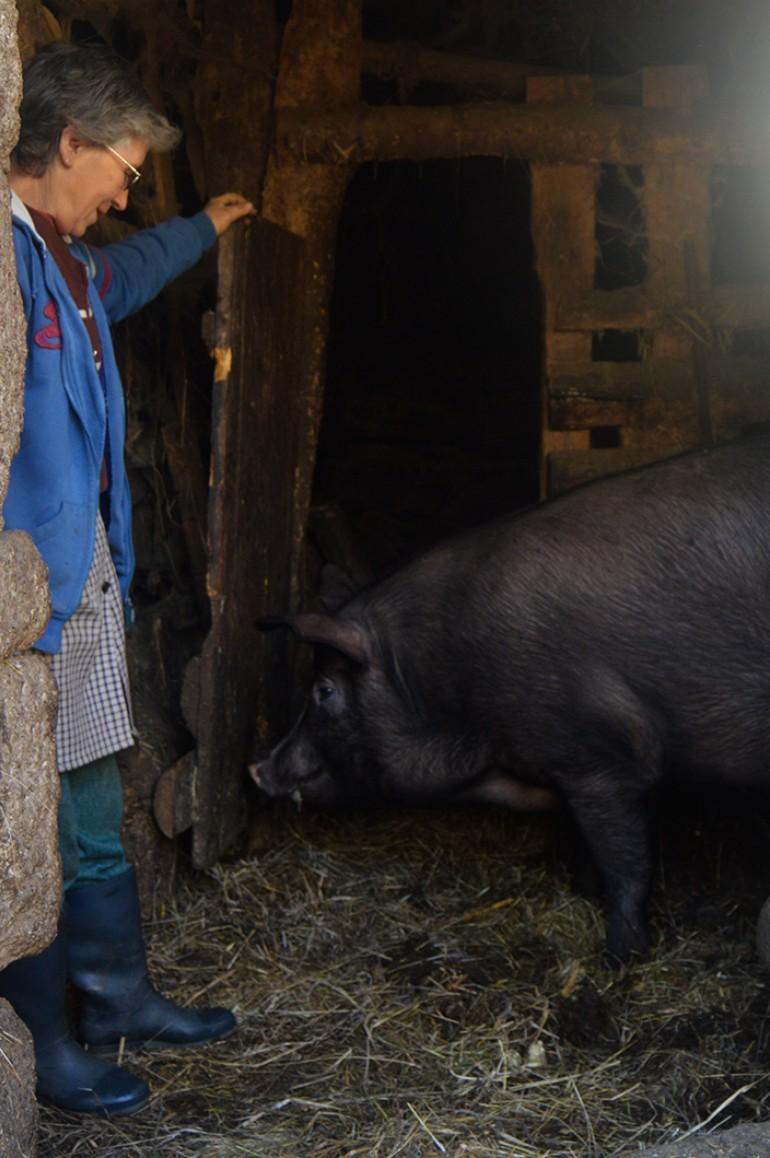 Iracema e o porco Tiago