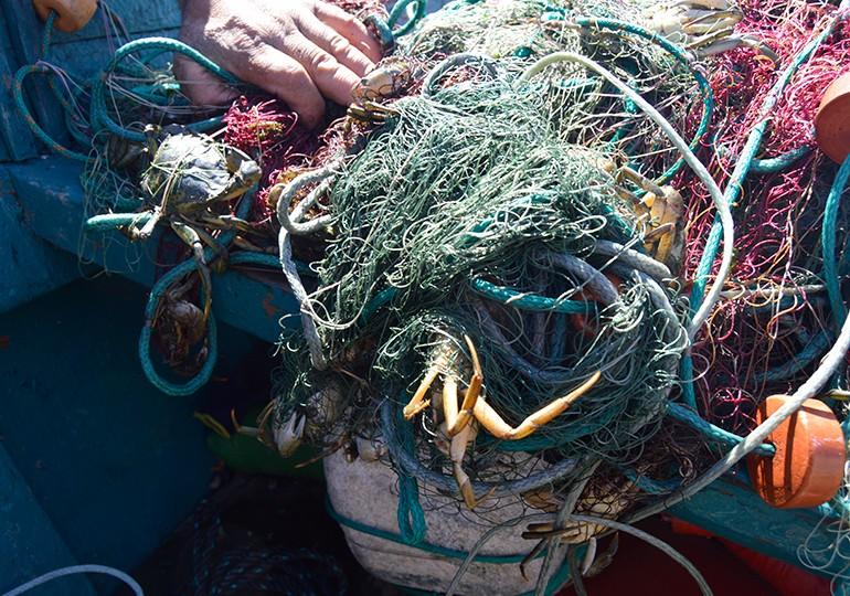 Caranguejos que estragam as redes